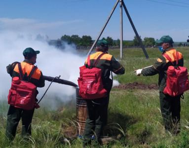 Лесничие тренировались тушить огонь в Лысогорском районе